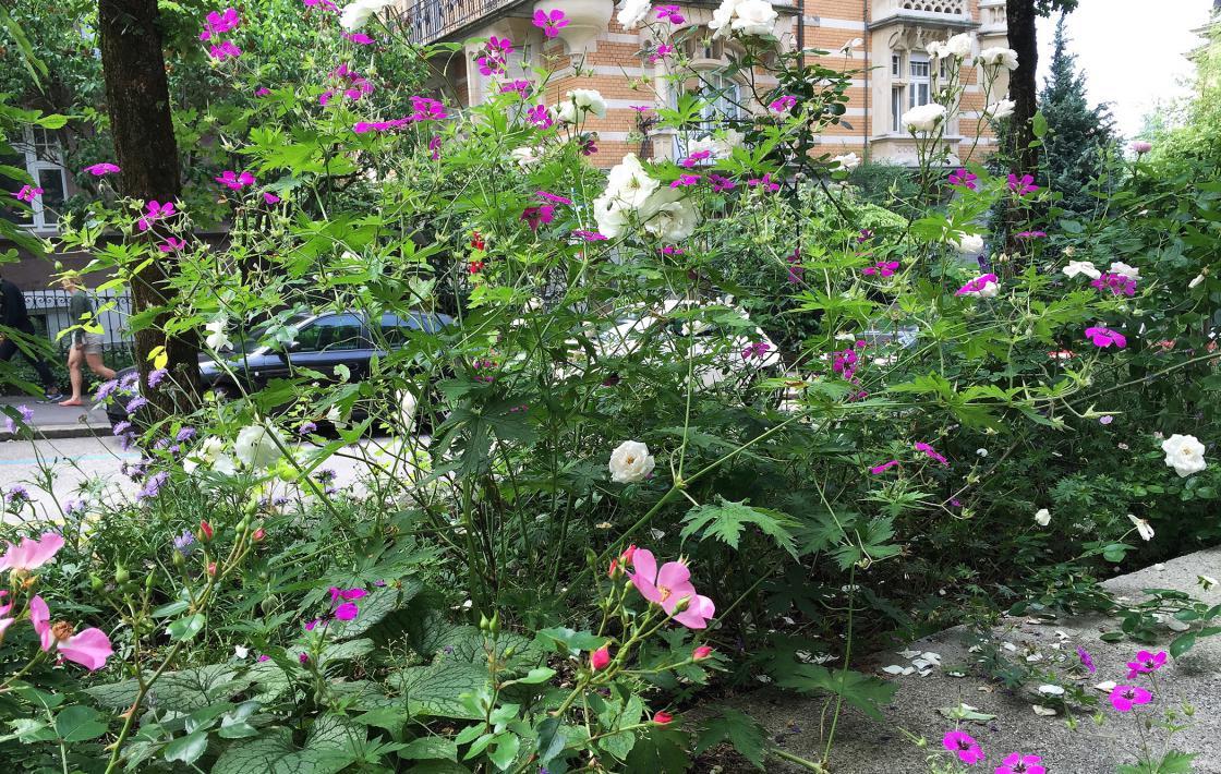 Rosenrot – Garten in einem einzigen Beet