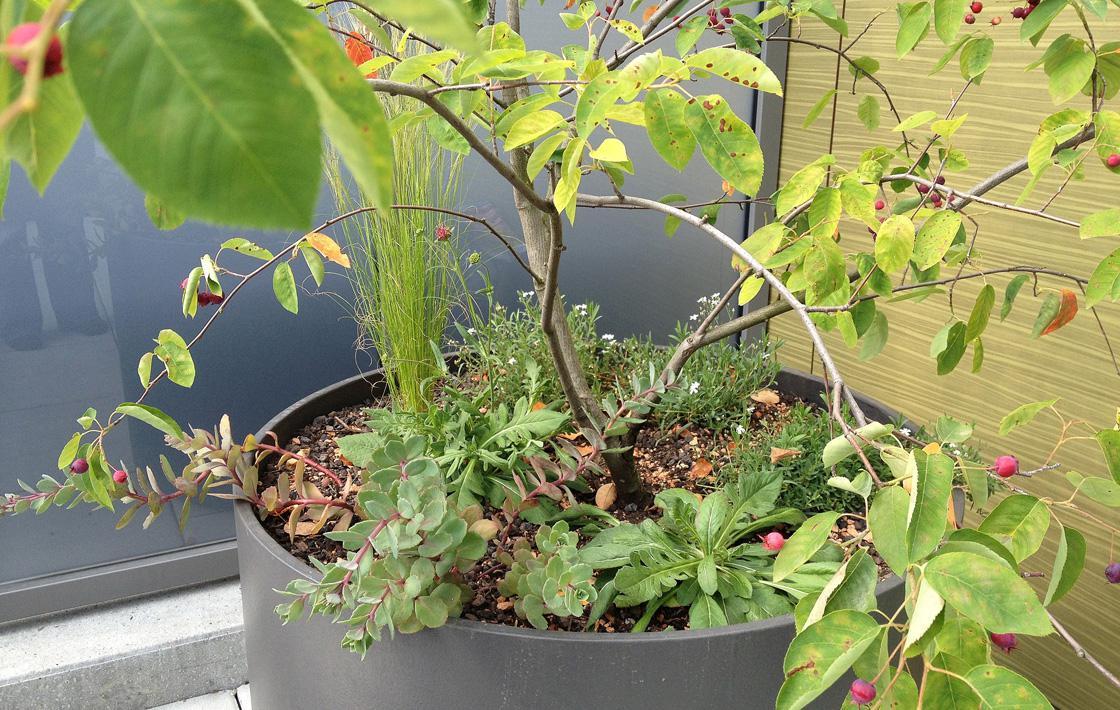 Eintopf – Ein Terrassengarten