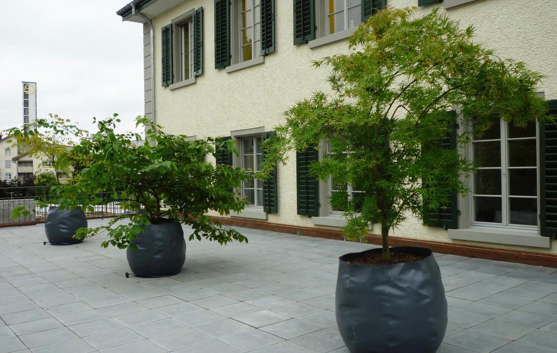 Schulpflege Altstetten – Bepflanzung einer Terrasse