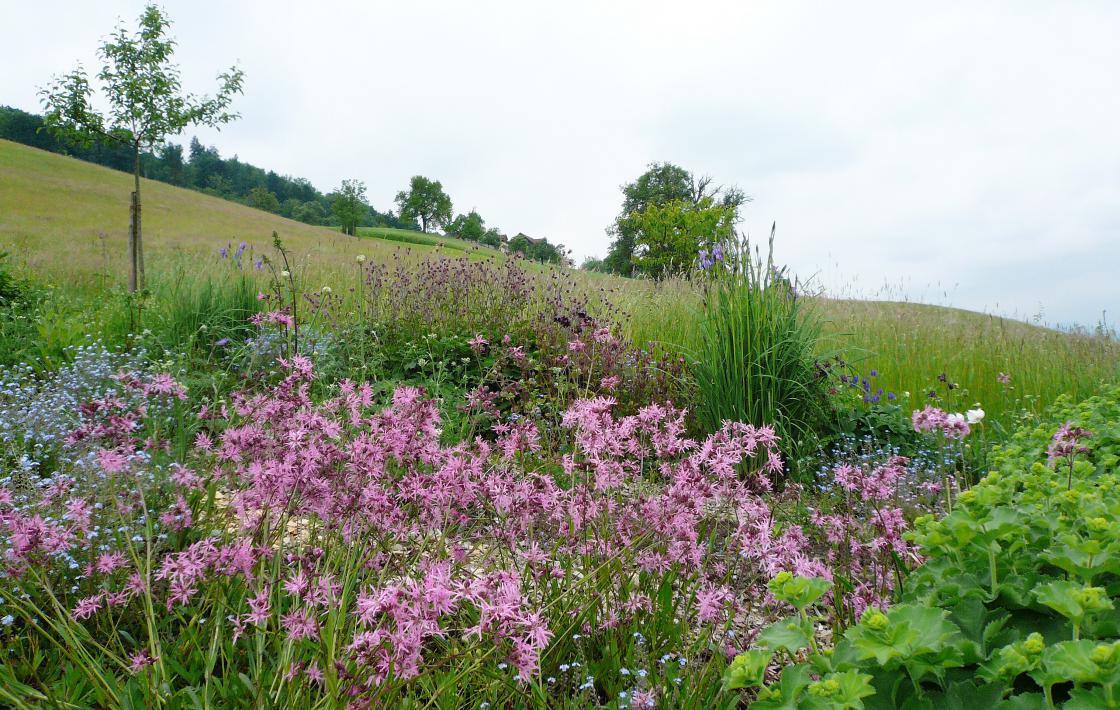 Zum Selberschneiden – Ein Blumenfeld der anderen Art