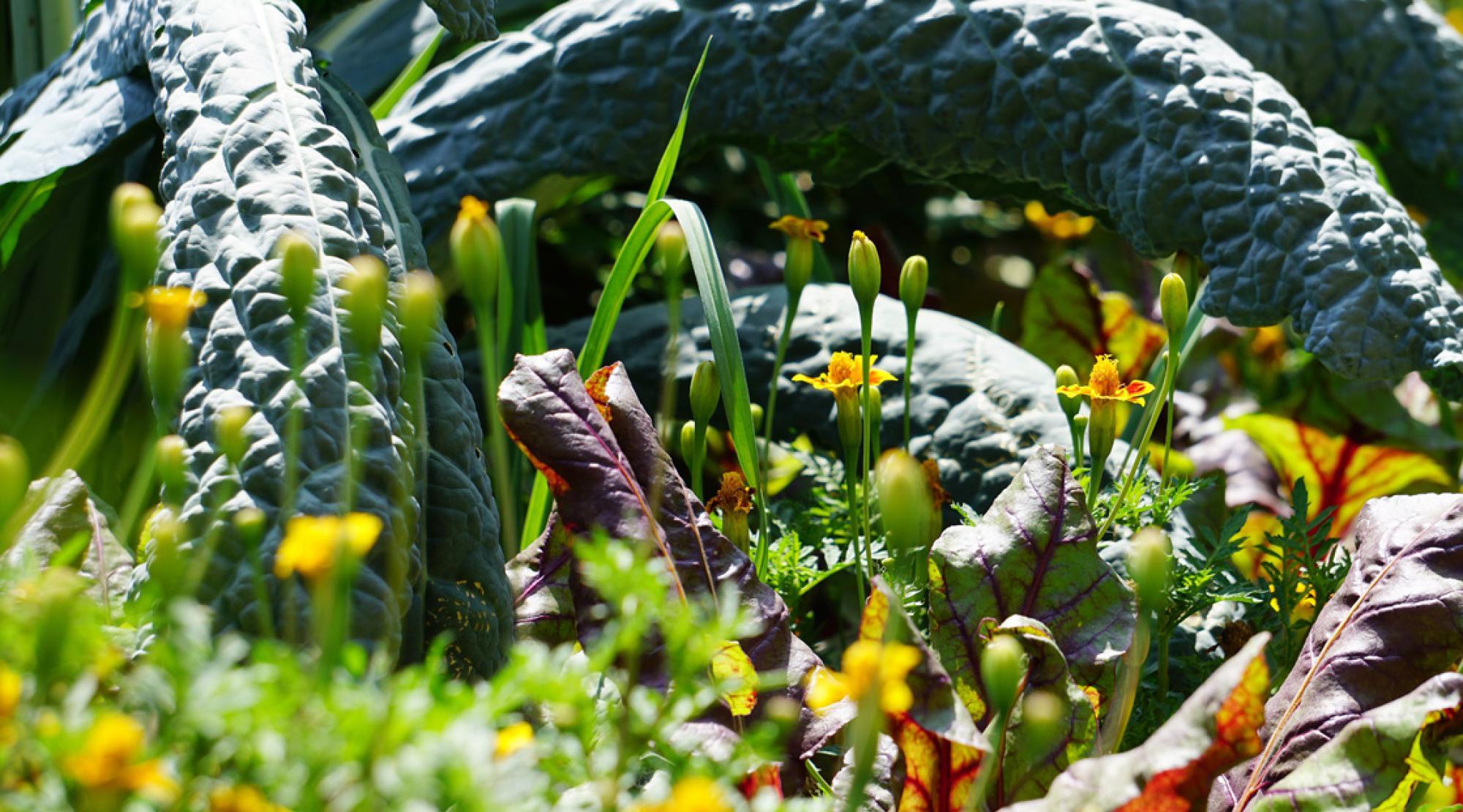 Alte Sorten – Schaugärten von ProSpecieRara