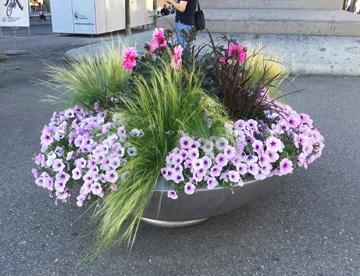 Die Blumenschalen der Stadt Bern