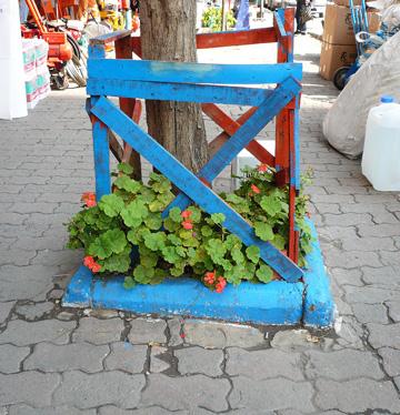Pelargonien mal anders